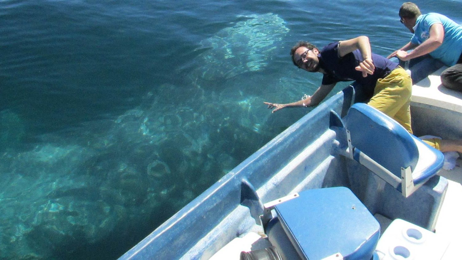 Magdalena Bay Whales