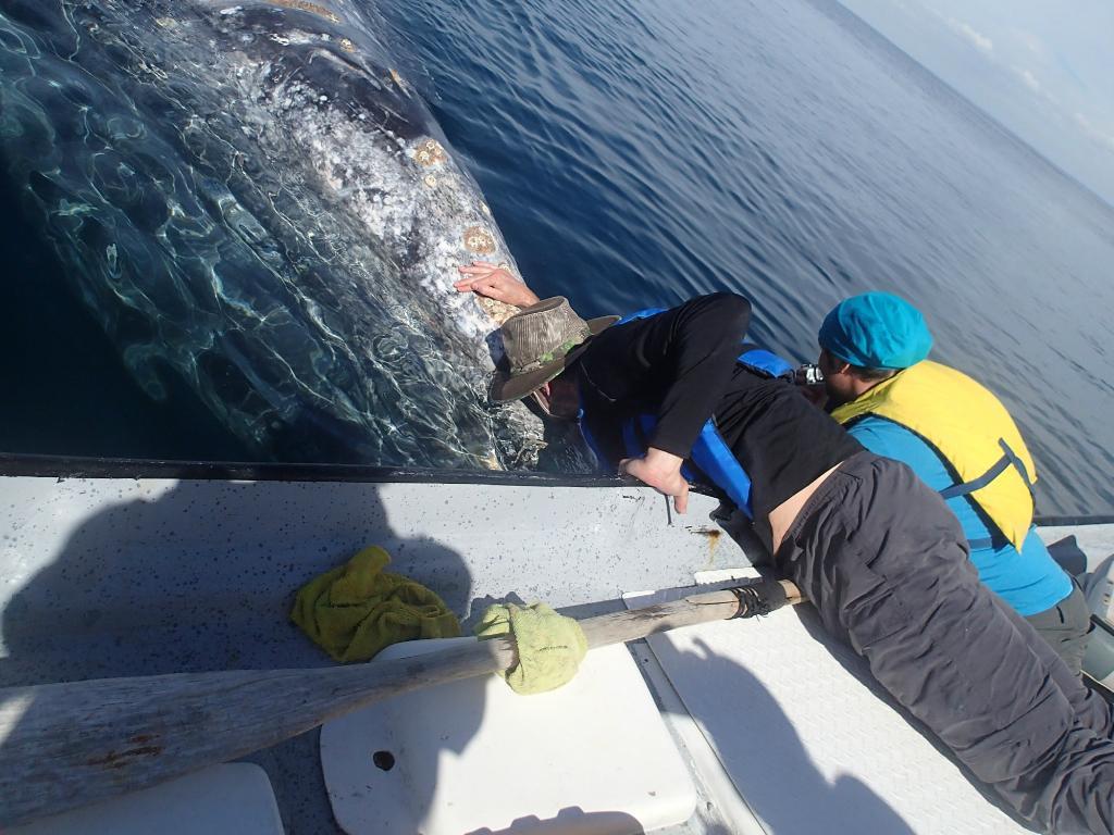 magdalena-bay-whales (16)